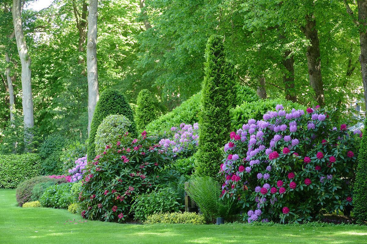 Rhododendron in Kombination mit anderen Gartensträuchern