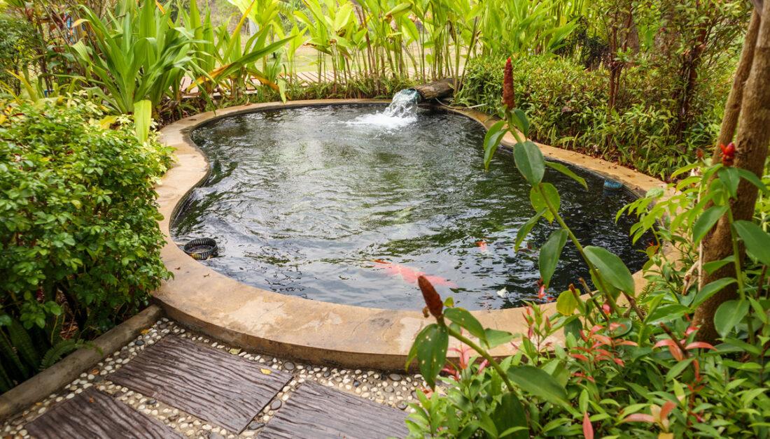 Moderne Gestaltung eines Schwimmteichs im immergrünen Garten - Beispiel mit kleinen Wasserfall & Wegplatten zum Gartenteich