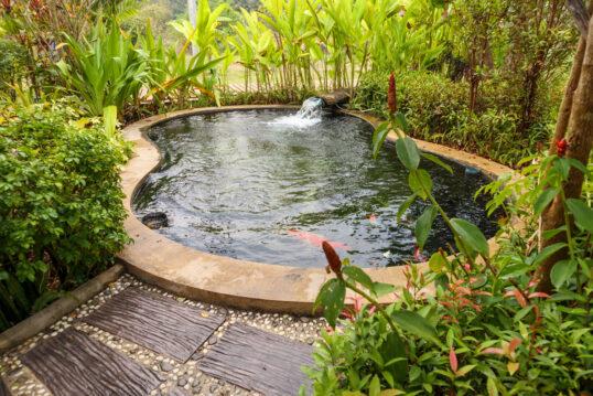 Moderne Gestaltung eines Schwimmteichs im imm...