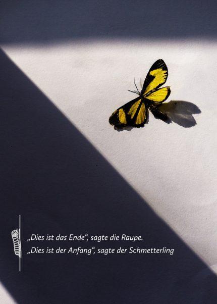 Raupe & Schmetterling