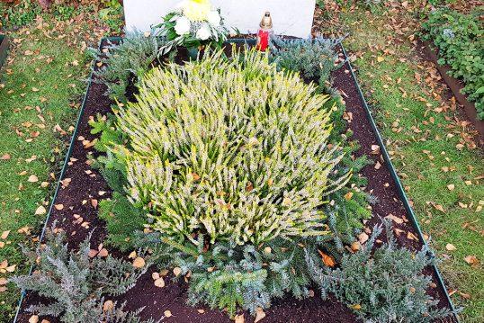 Winterliche Grabgestaltung eines Einzelgrabes mit einer pflegeleichten Bepflanzung aus Heidekraut und Nadelgehölzen umrahmt mit Tannenzweigen