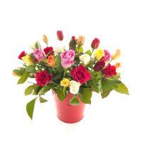 Blumenpflanzen