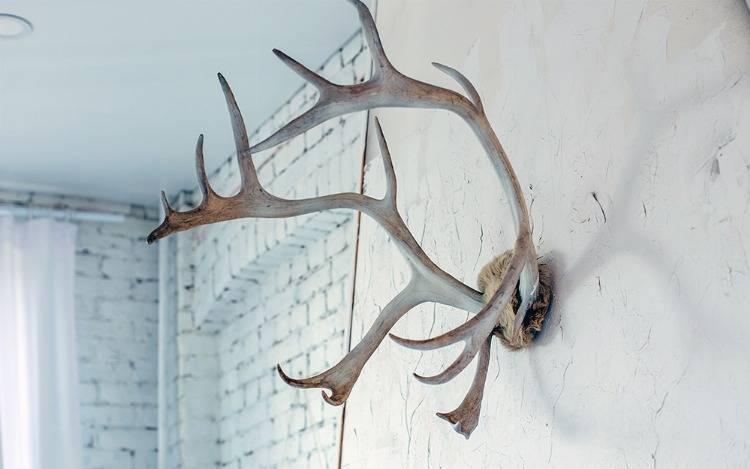 Wild und aufregend schön: Hirschköpfe und Hirschgeweihe für die Wand