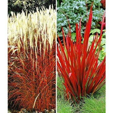 Rote Gräser-Kollektion