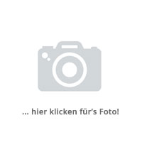 50 Stk. Vinca minor »Alba« - (Kleinblättriges Immergrün »Alba«), Topfware