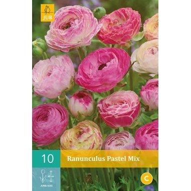Ranunkel Pastel Mischung - Ranunculus