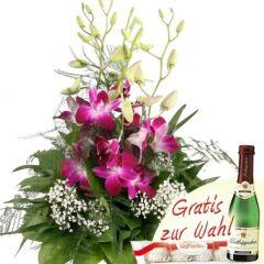Tropenperle Dendrobien Special Orchideen günstig verschicken