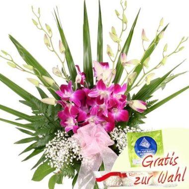 Beautiful Power Orchideen-Special Dendrobien