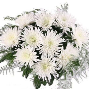 10 weiße Deko-Chrysanthemen Feder oder Ballförmig