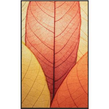 Echinacea Kapseln