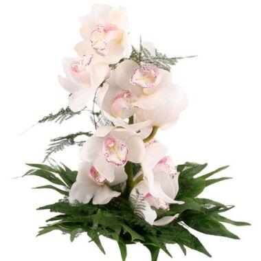 Orchidee Traum in Weiß der günstige Orchideen Strauß