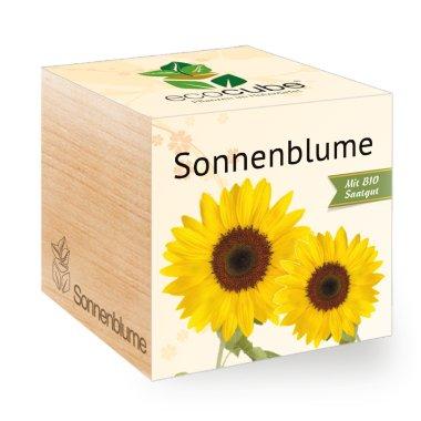 Sonnenblume im Holzwürfel mit Bio-Samen