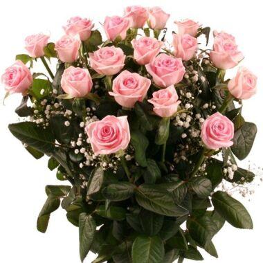 Rosenstrauß Sehnsucht 20 langstielige Rosen mit Schleierkraut aufgebunden