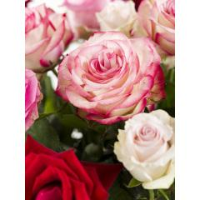 Rosa-Roter Rosenmix inklusive Lindt Herz | Rosenstrauß online bestellen
