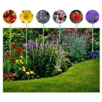 Beetpaket für lange blühende Blumenbeete (6 Pflanzen)