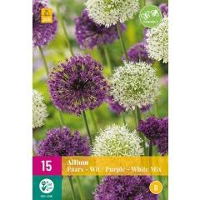 Alliums Violett & WeiÃÂ Mischung