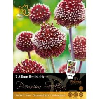 Allium Red Mohican Zierlauch