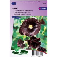 Stockrose Jet Black, einzelblumig