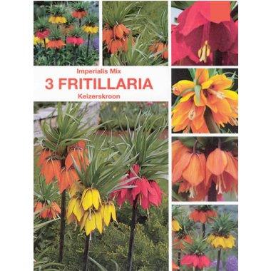 Fritillaria Imperialis Mischung