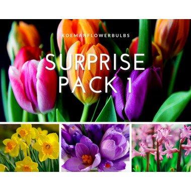Blumenzwiebeln Surprise pack 1
