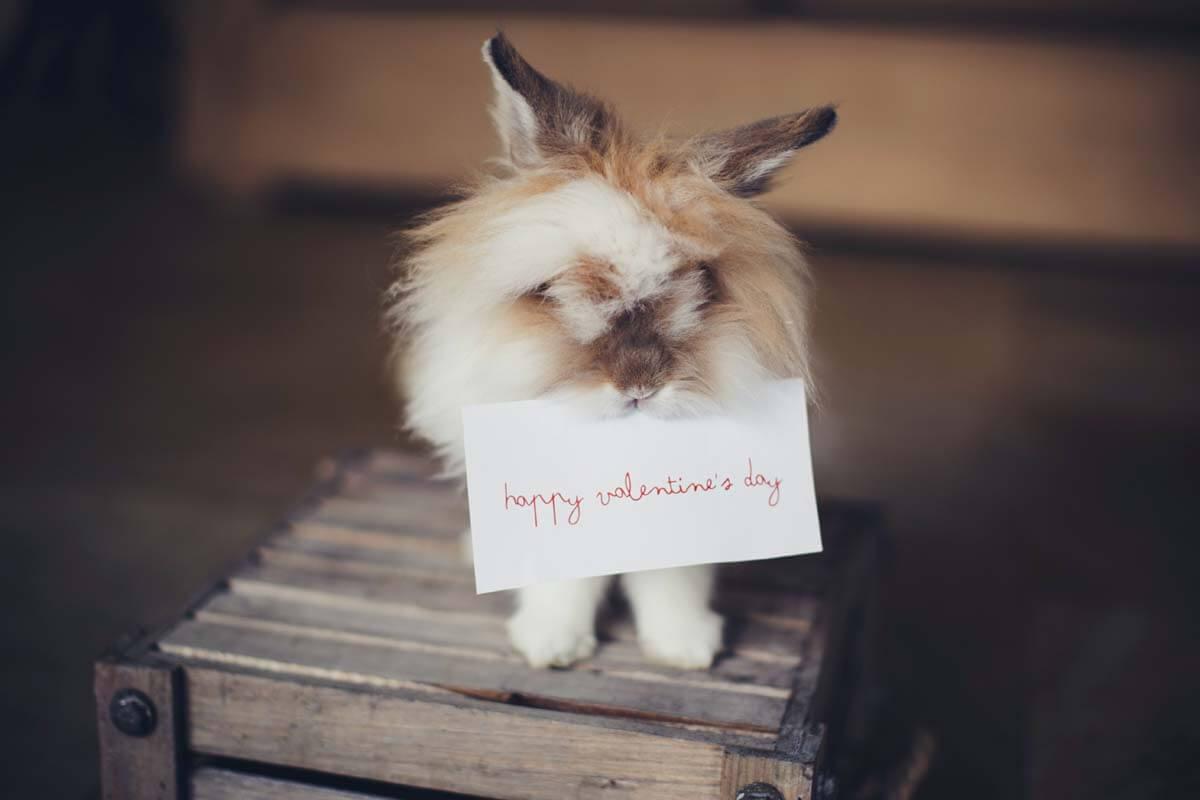Hase mit Valentinsgrußkarte