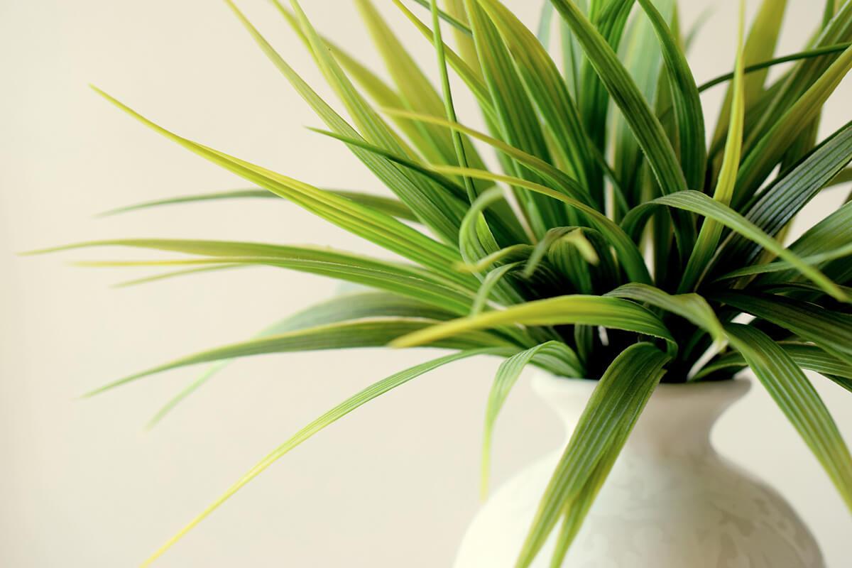 Zimmerpflanze in einer Porzellan-Vase als Feng Shui-Deko
