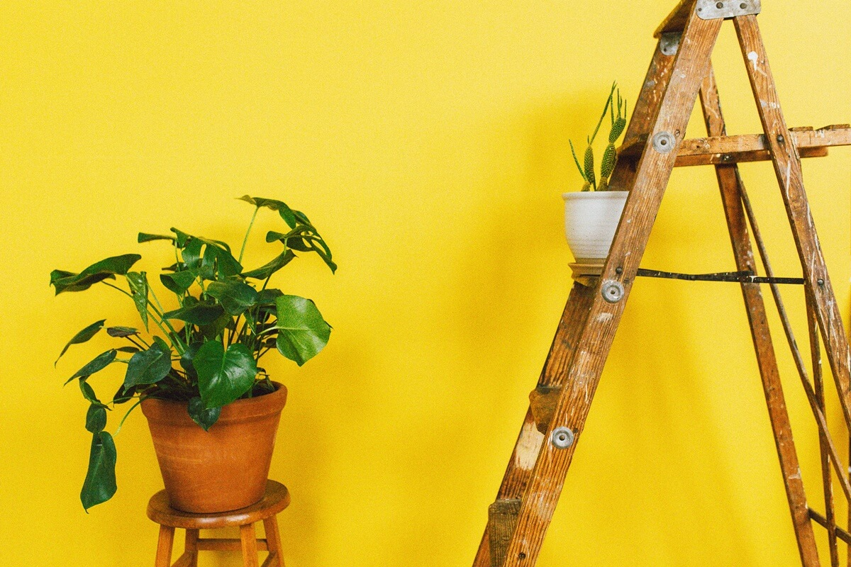 Wand in strahlendem Gelb und Pflanzen-Deko