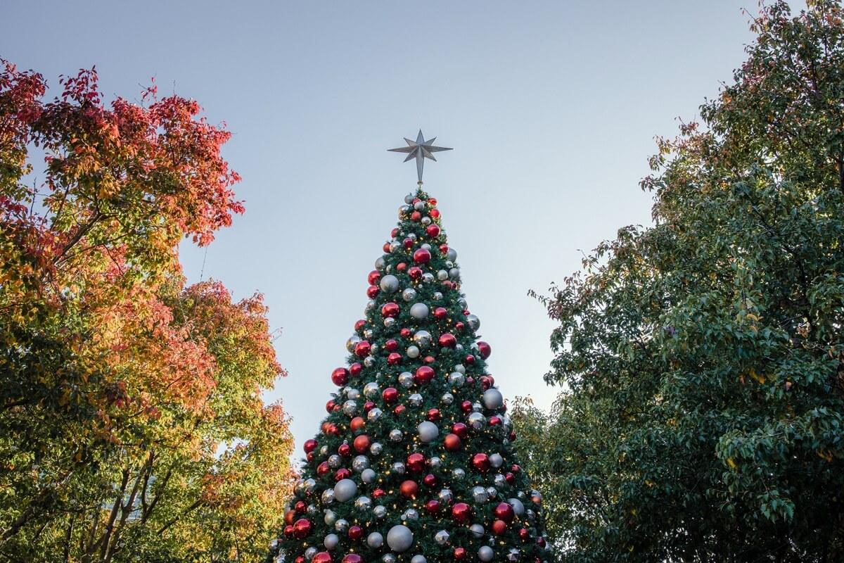 XXL-Weihnachtsbaum im Freien