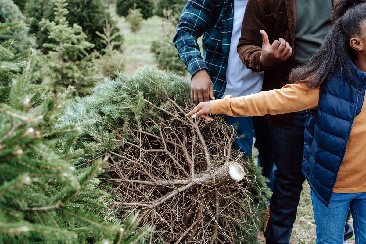 Familie beim Schlagen ihres Weihnachtsbaumes