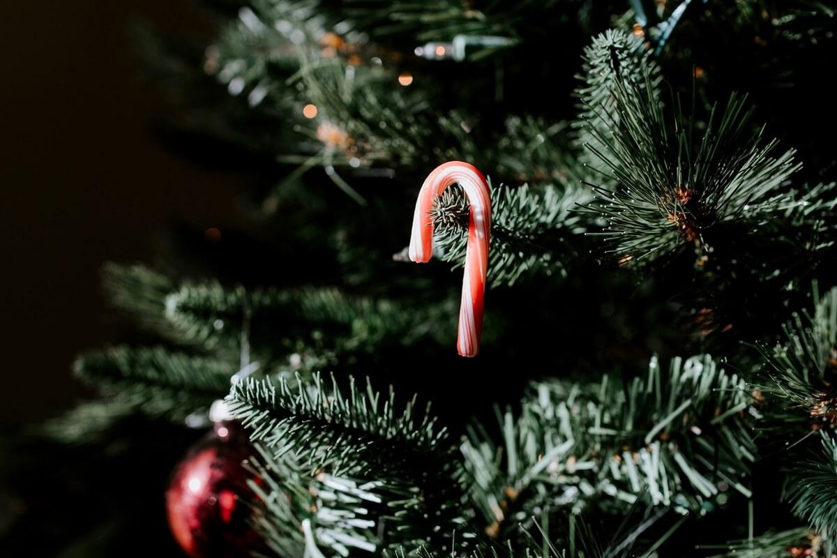 Weihnachtsbaum mit Zuckerstangen schmücken